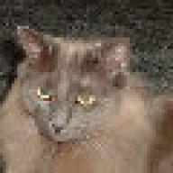 keetercat