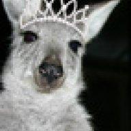 kangaroocrazy
